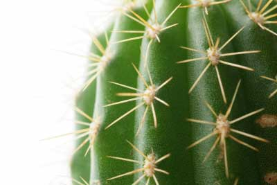 How to Cuddle with your Cactus